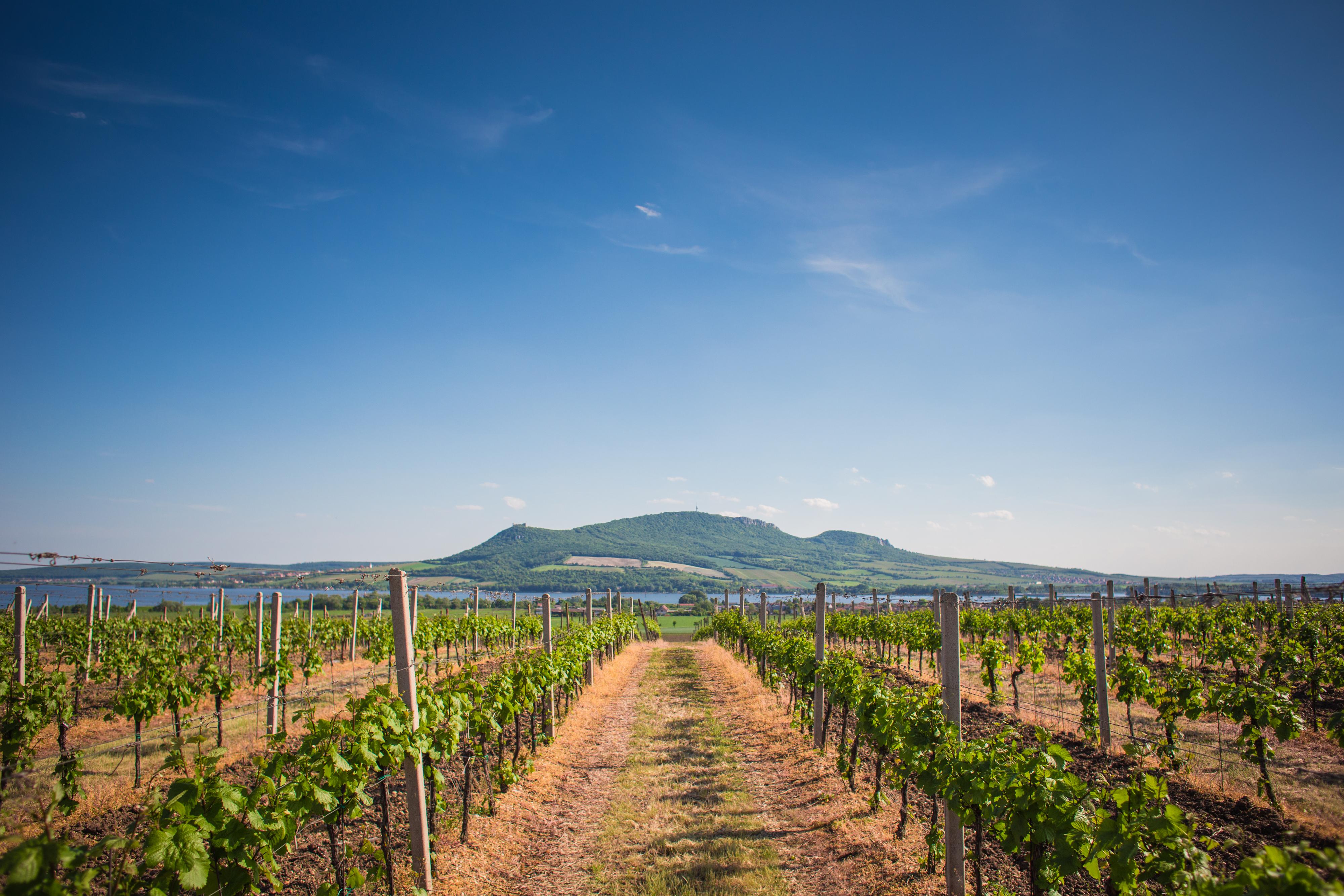 palava-hills-wine-scenery-czech-republic-picjumbo-com